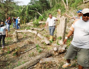 En algunas zonas deforestan amplios terrenos de vegetación autóctona para cultivar aguacates.